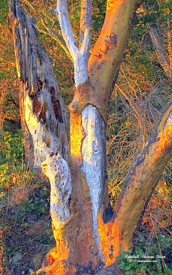 Photograph - Tree In The Sunset by Randall Thomas Stone