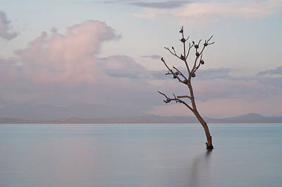 Malapascua Island Photograph - Tree In Water by Flash Parker