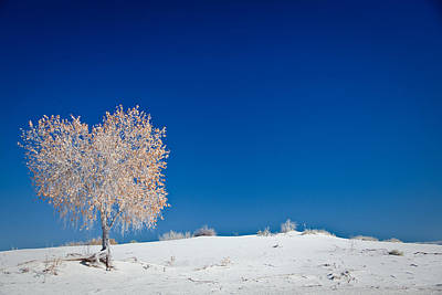 Tree In White Sands Print by Ralf Kaiser