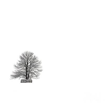 Tree Isolated Under The Snow In The Middle Field In Winter. Art Print by Bernard Jaubert