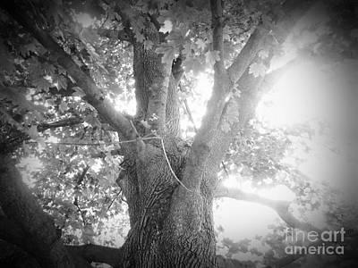 Tree Art Print by Jeremy Wells