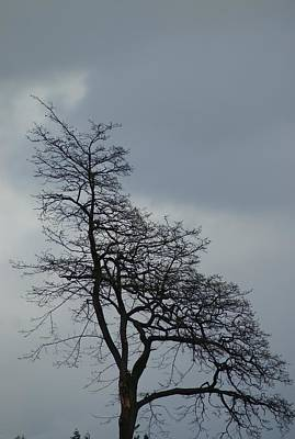 Art Print featuring the photograph Tree by Jerry Cahill