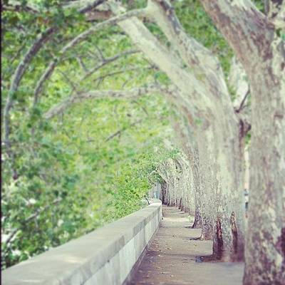 Pathway Photograph - #tree by Julia Meyer