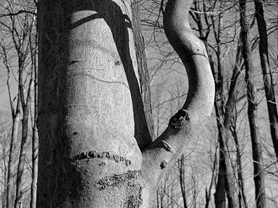 Photograph - Tree Kettle by Douglas Pike