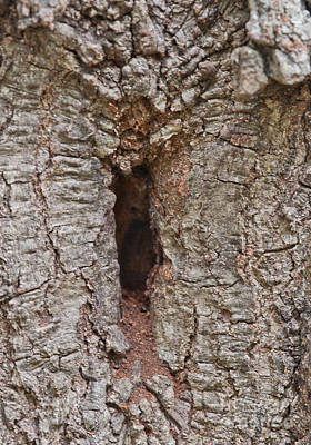 Naughty Photograph - Tree Knot Naughty - Or Knaughty Knot Not by Wayne Nielsen