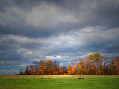 Photograph - Tree Line On Sunset Hill In New Hampshire by Nancy Griswold