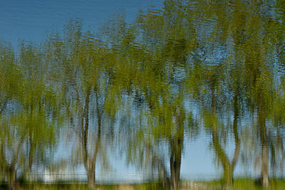 Photograph - Tree Line Reflections by Colleen Coccia