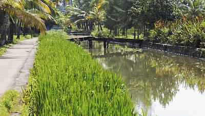 Rickety Bridge Photograph - Tree Lined Waterways by Kantilal Patel