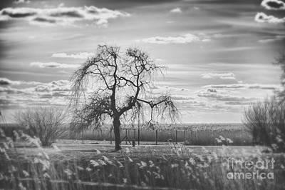 Tree Art Print by Miso Jovicic