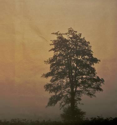 Tree Art Print by Odd Jeppesen
