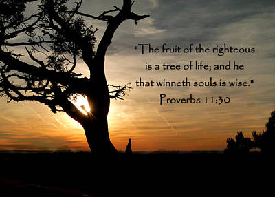 Photograph - Tree Of Life Of Proverbs 11 by Cindy Wright