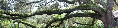 Oldest Living Tree Photograph - Tree Of Life Panorama by Teresa Mucha