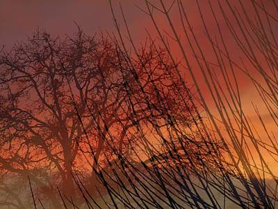 Tree Of Life Sunset Art Print by Cindy Wright