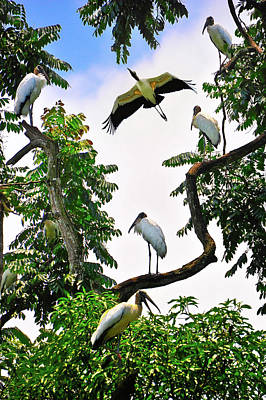 Photograph - Tree Of Storks  by Harry Spitz