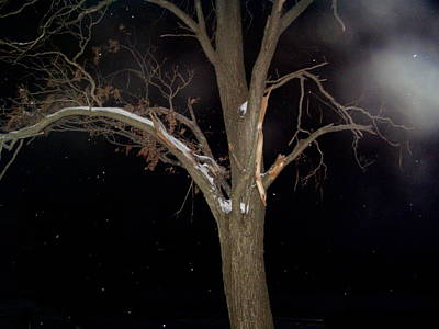 Tree On A Dark Snowy Night Art Print by Victoria Sheldon