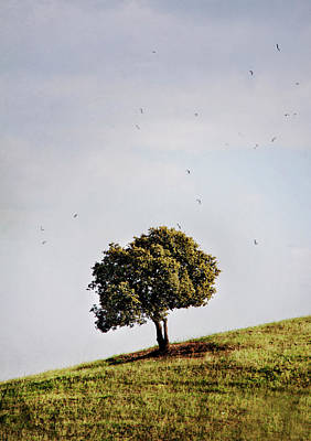Of Birds Photograph - Tree On Hill by Antonio Arcos Aka Fotonstudio Photography