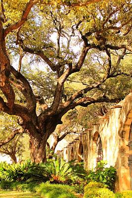 Tree Over Alamo Gardens II Art Print