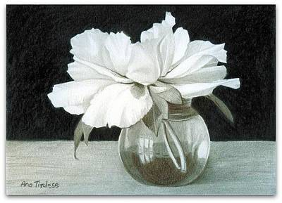 Drawing - Tree Peony by Ana Tirolese