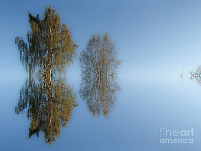 Photograph - Tree Reflection In Vaerebrovej by Michael Canning