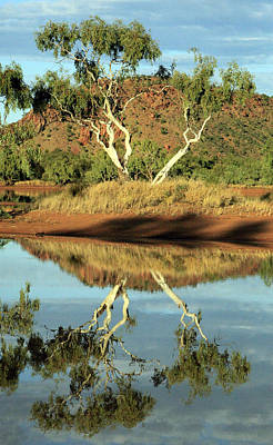 Photograph - Tree Reflections by James Mcinnes