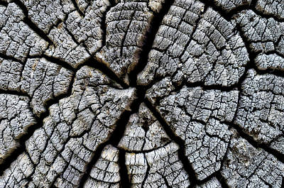 Photograph - Tree Ring Cracks by Steve Hurt