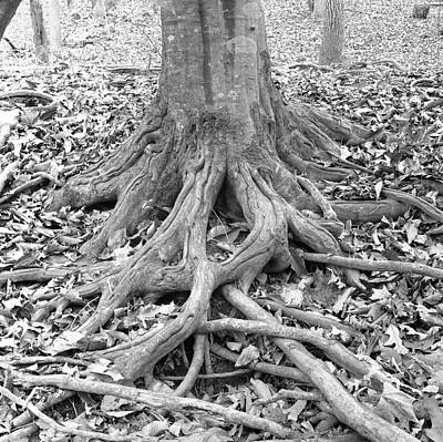 Tree Roots Photograph - Tree Roots And Leaves by Holden Richards