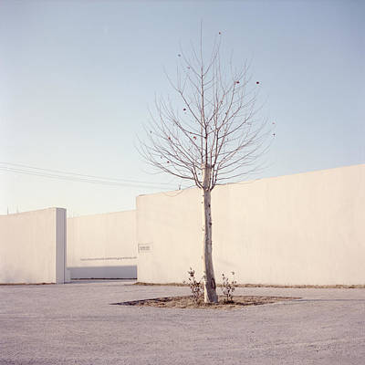 Y120817 Photograph - Tree by Seatory