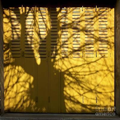 Bare Trees Photograph - Tree Shadow by Bernard Jaubert