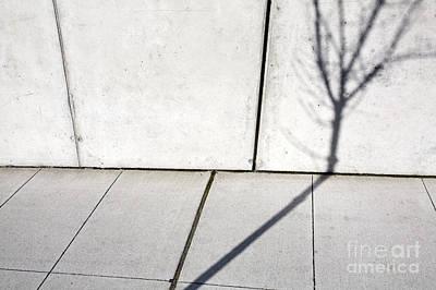 Cement Walkway Photograph - Tree Shadow On Wall by Paul Edmondson