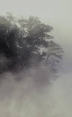 School Teaching - Tree Shrouded In Fog by David Chapman