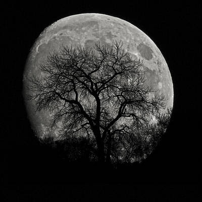 Photograph - Tree Silhouette On Moon by Ernie Echols
