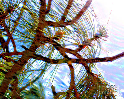 Photograph - Tree Swirls by Julie Lueders