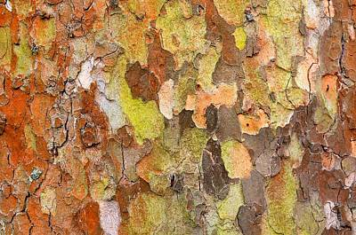 Tree Texture Art Print