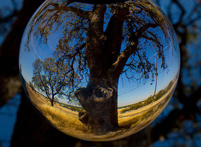 Photograph - Tree Through A Glass Eye by Robert Woodward