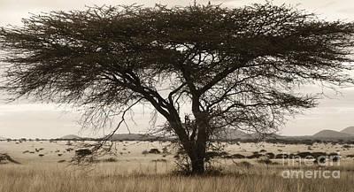 Photograph - Tree by Tina Broccoli