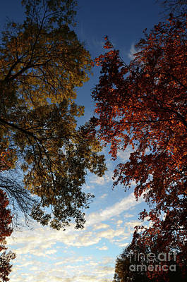 Tree Top In Autumn Print by Bruno Santoro