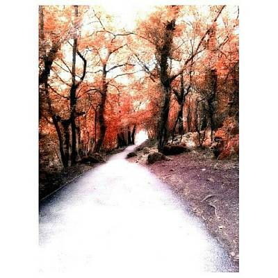 Pathway Wall Art - Photograph - #tree #treeporn #treeslovers by Little Images