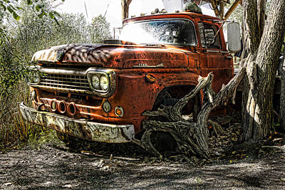 Tree Truck Art Print by Peter Chilelli