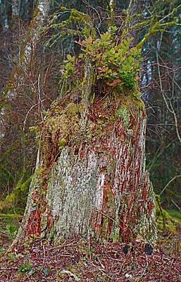 Photograph - Tree Trunk And Flora by Jeanne Kay Juhos