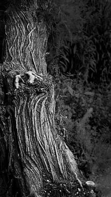 Photograph - Tree Trunk by Nadya Ost