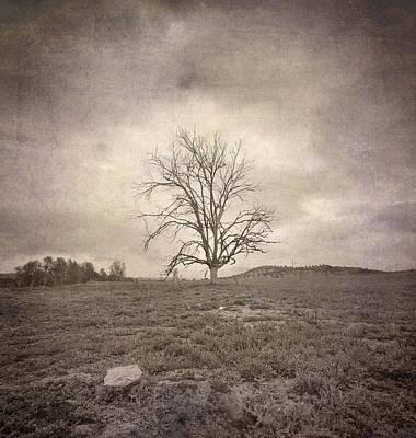 Tree Under The Rain Art Print by Guido Montanes Castillo