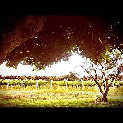 Vineyard Photograph - #tree #vineyard #wine #scenery by Glen Offereins