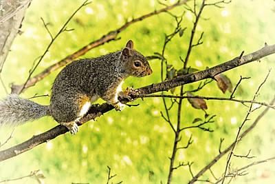 Tree Visitor Print by Karol Livote