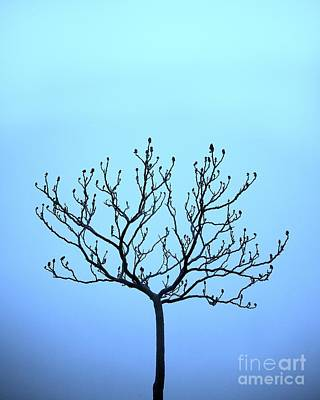 Tree With The Blues Art Print