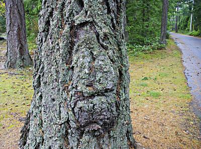 Photograph - Treebeard by Marilyn Wilson