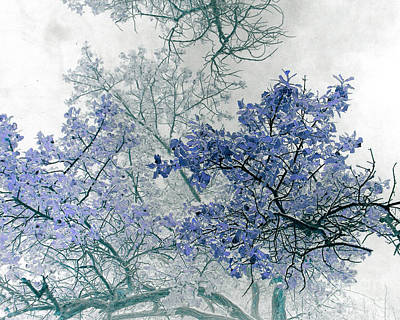 Trees Above Art Print