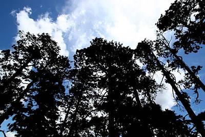 Trees Against The Sky Print by Joe Kozlowski