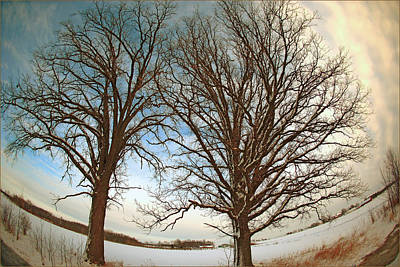 Photograph - Trees Against The Winter Sky by Fuad Azmat