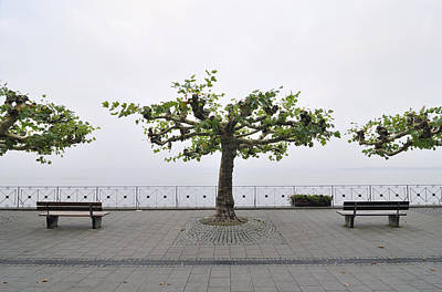 Photograph - Trees And Benches by Matthias Hauser