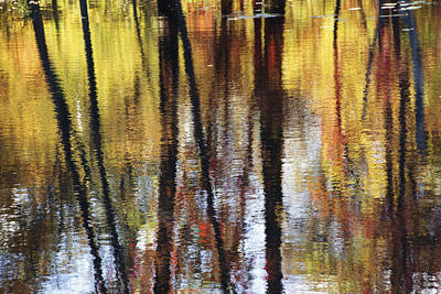 Trees And Fall Foliage Reflected Art Print by Medford Taylor